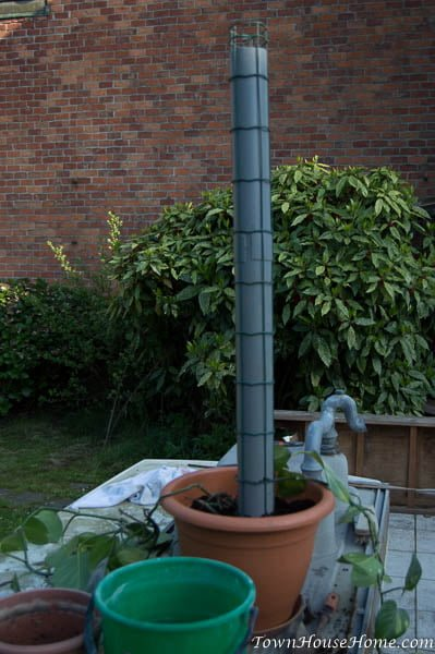 Diy plant support tube in pot